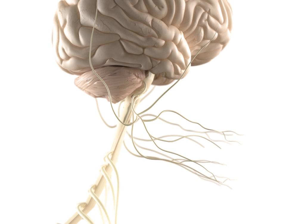 central-sleep-apnea-and-the-brain
