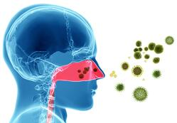 pollen leads to inflammation caused by the immune response in people with allergies